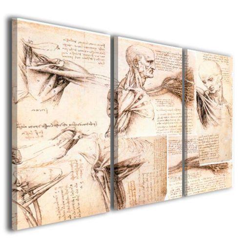 Quadri moderni Leonardo da vinci anatomical study stampe su tela
